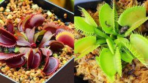Nejlepší semínka zAliExpressu: 10 tipů na balíčky od 3Kč