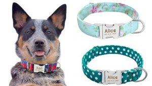 Nejlepší obojky pro psy zAliExpressu: 9 zajímavých tipů pro vašeho mazlíčka