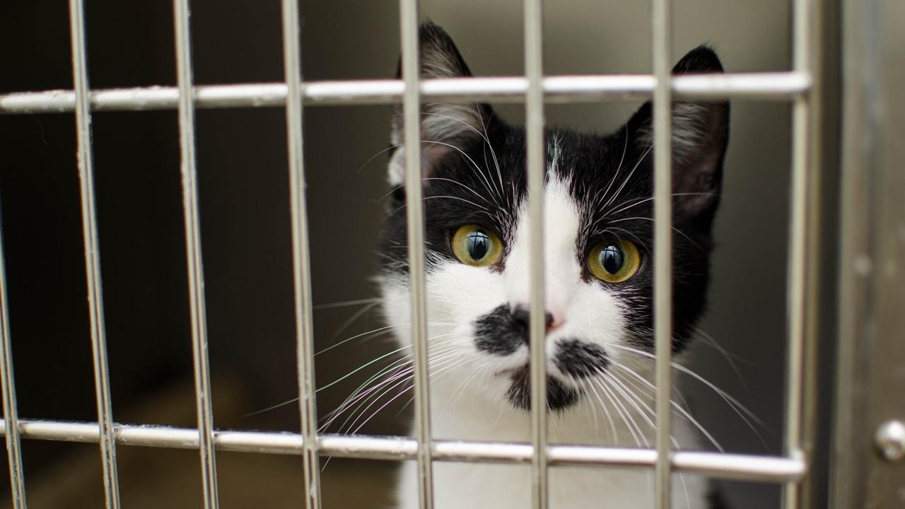 Cómo atrapar a un gato | © Pixabay.com