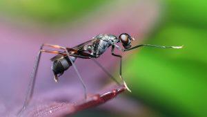 Cómo atrapar hormigas