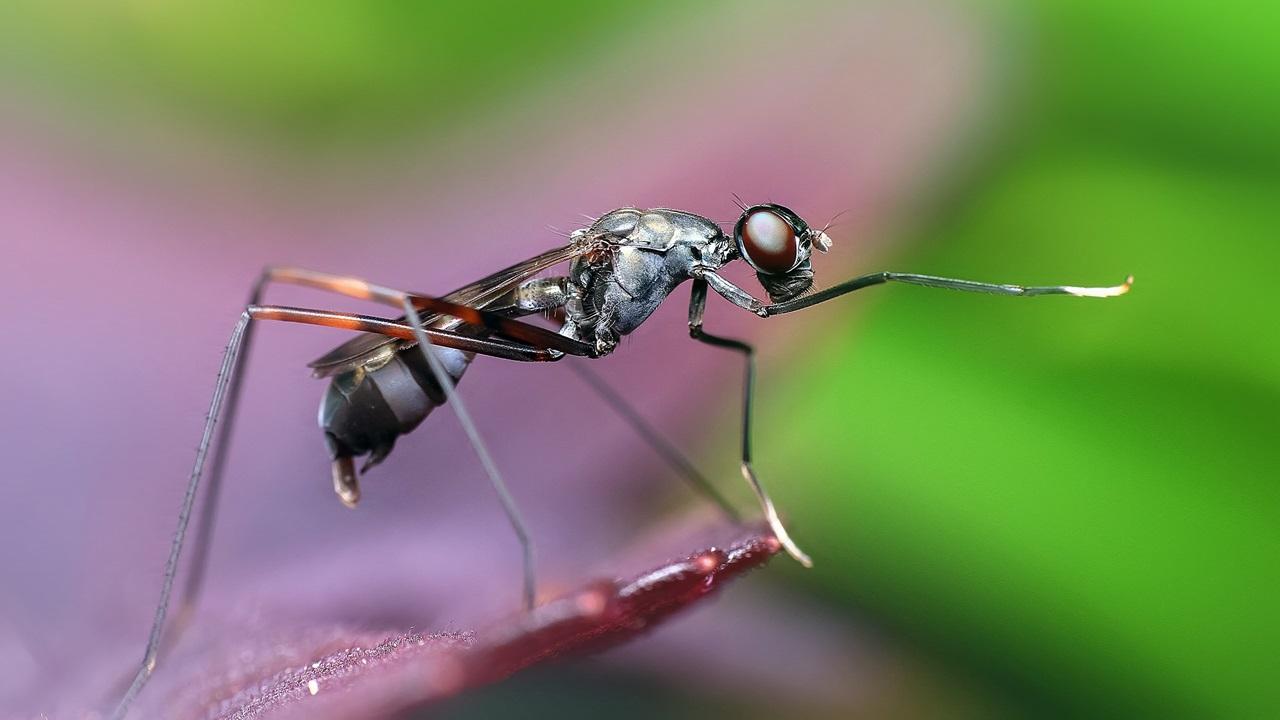 Cómo atrapar hormigas | © Pixabay.com