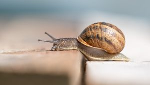 Cómo criar caracoles
