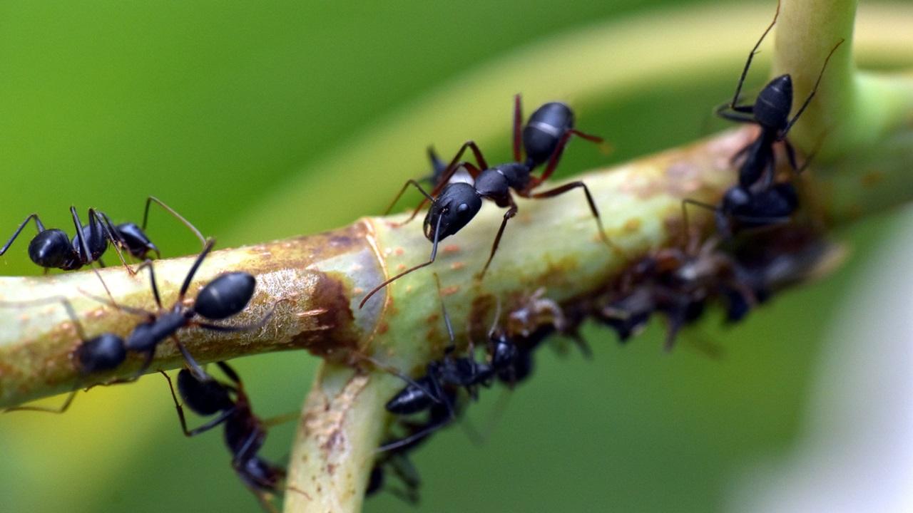 Cómo criar hormigas | © Pixabay.com
