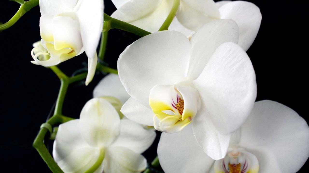 Cómo cultivar orquídeas | © Pixabay.com