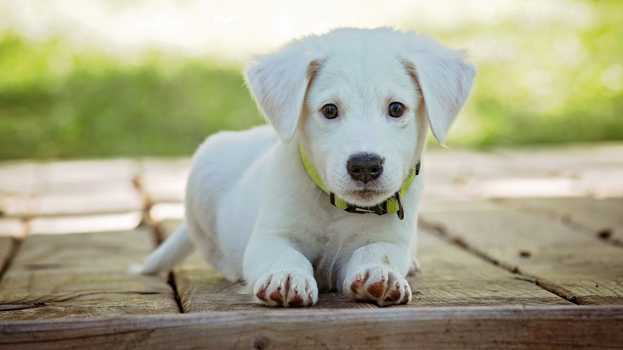 Cómo enseñar a un cachorro a no morder | © Pixabay.com