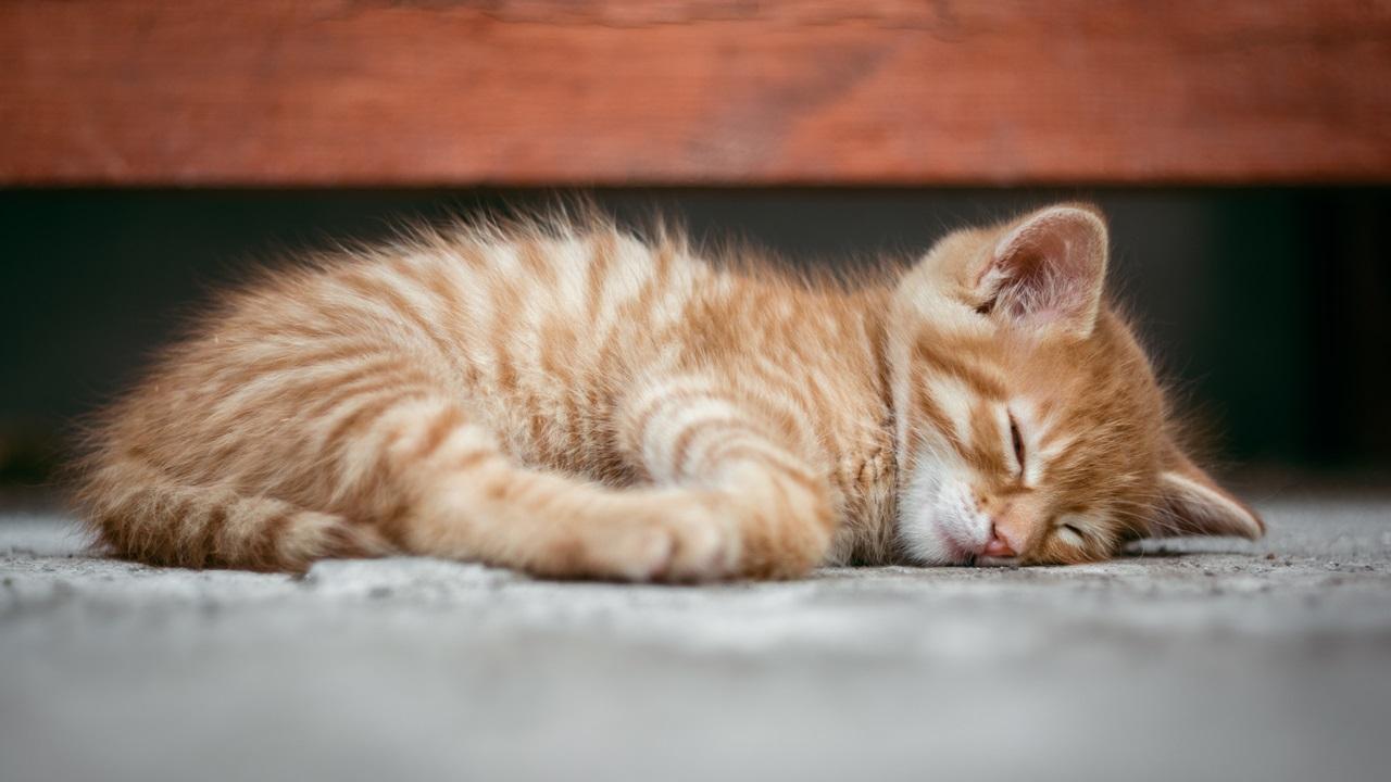 Cómo enseñar a un gato   © Pixabay.com