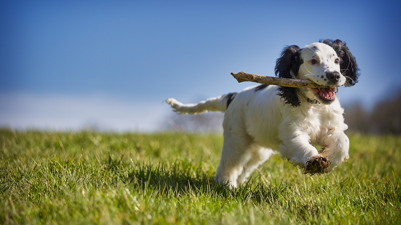 Cómo enseñar trucos a tu perro | © Pixabay.com