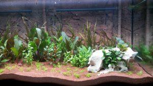 Cómo hacer un terrario de plantas