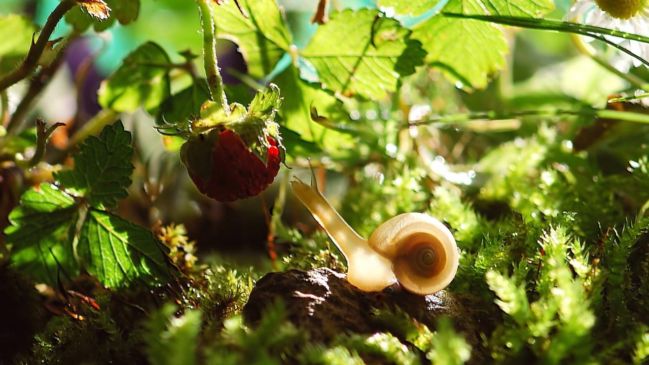 Cómo hacer un terrario para caracoles   © Pixabay.com