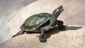 Cómo hacer un terrario para tortugas