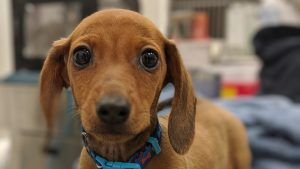 Cuándo vacunar a un cachorro