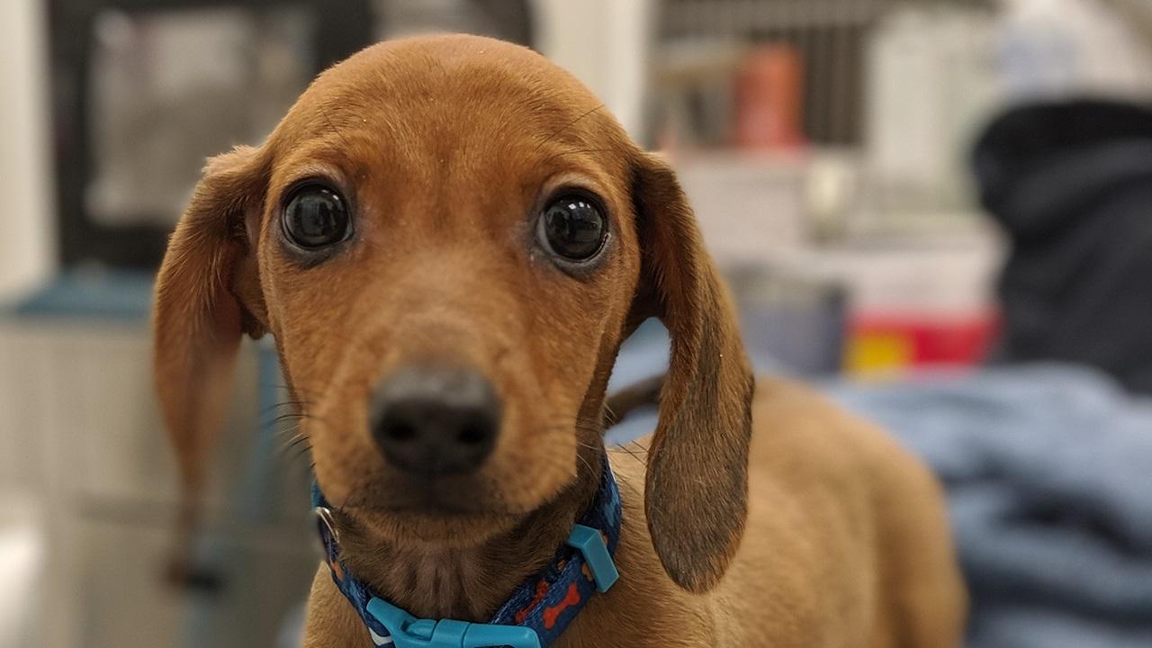 Cuándo vacunar a un cachorro | © Pixabay.com