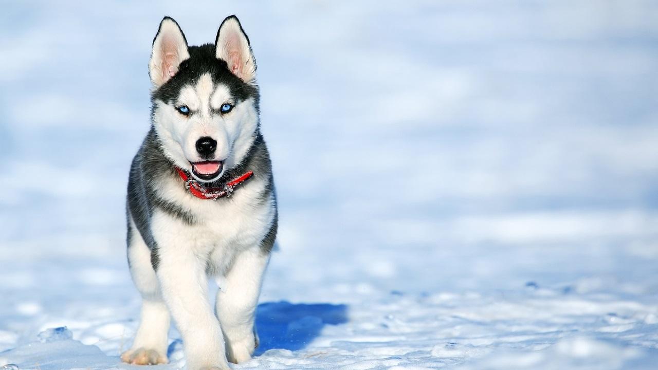Как выбрать собаку | © Pixabay.com