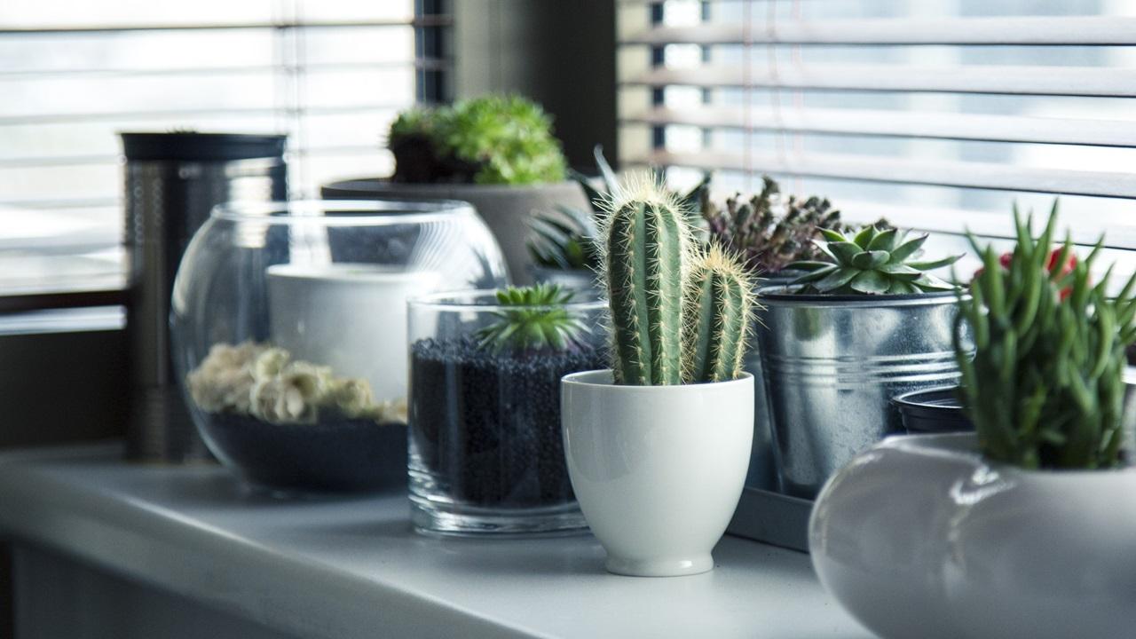 Как выращивать суккуленты из семян   © Pixabay.com