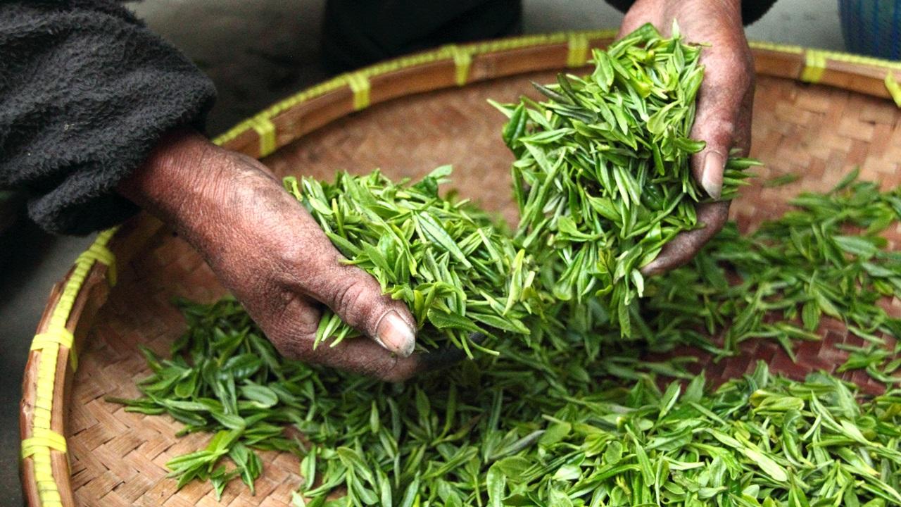 Ako dlho lúhovať zelený čaj   © Dreamstime.com