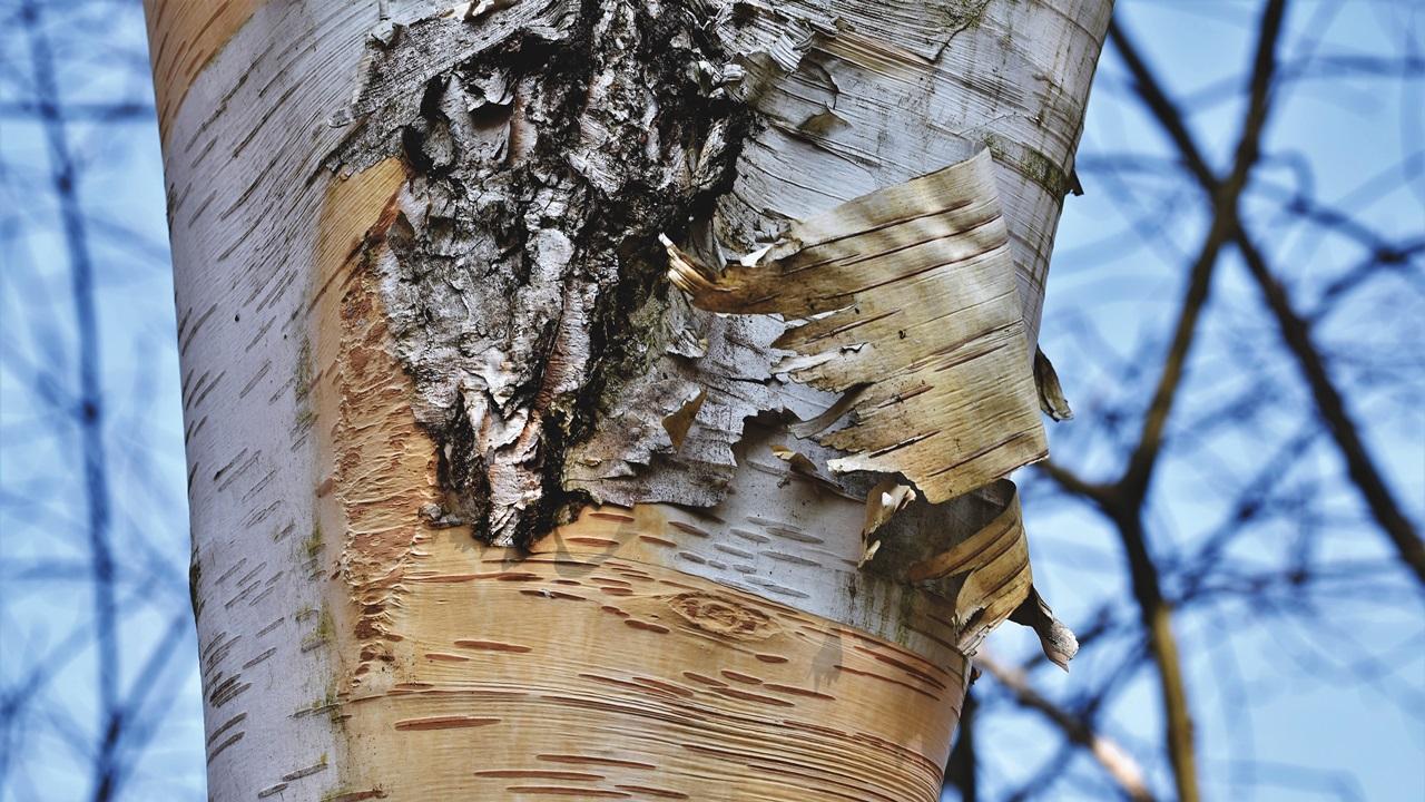 Ako ošúpať kôru zo stromu | © Pixabay.com
