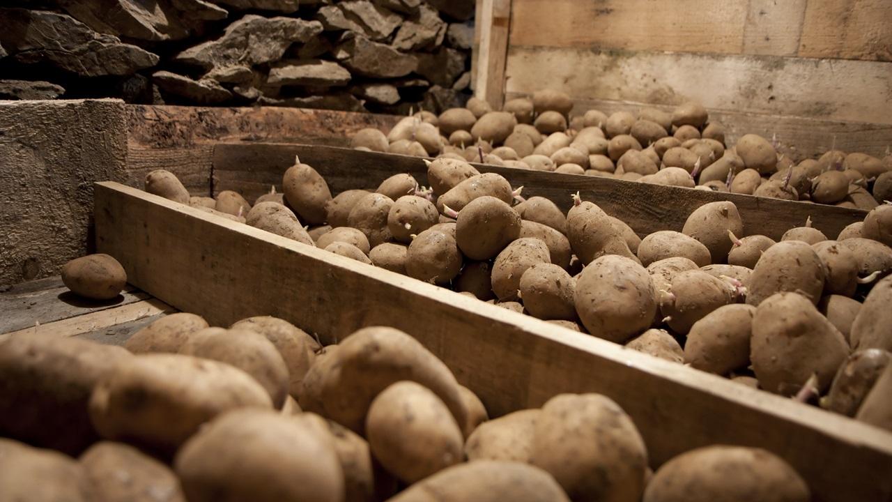 Ako ošúpať zemiaky   © Dreamstime.com