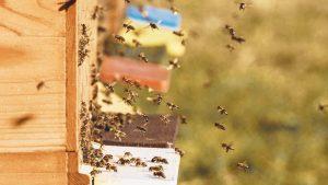 Ako zazimovať včely