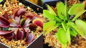 Найкраще насіння з AliExpress: 10 варіантів від 4 грн